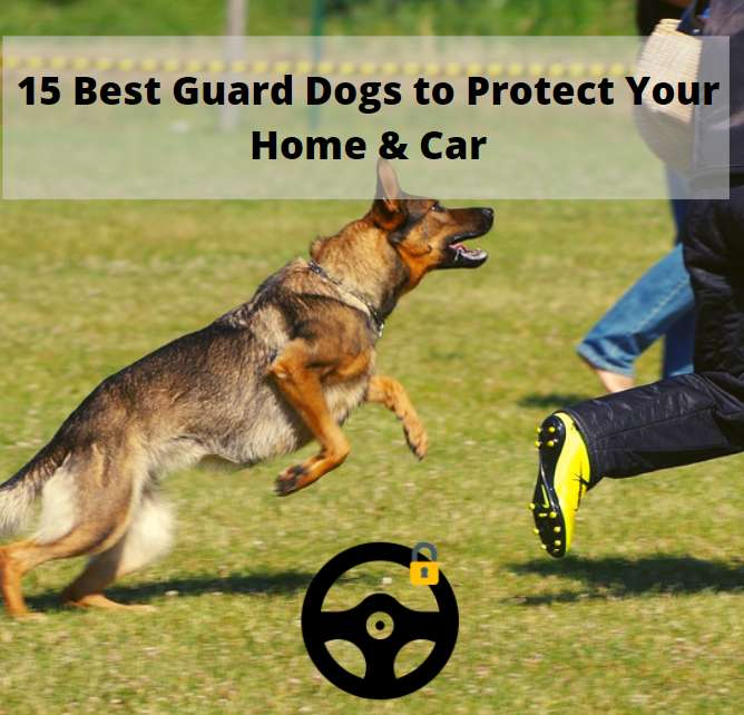 15 of the best guard dogs